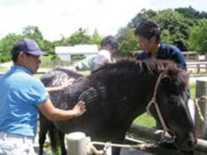 馬シャンプー体験