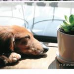 早川さん_犬と観葉植物